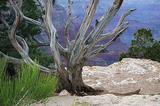 Reimar Gaertner - Rock garden on the precipice of the South Rim Grand Canyon