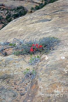 Rock Plant II 287 by John  Fix