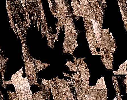 Rock Shadows by Will Logan