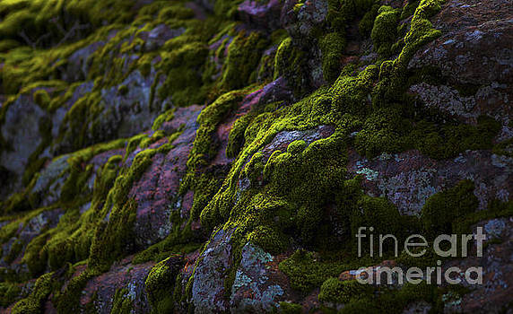 Rock with Green  by Barbara Schultheis