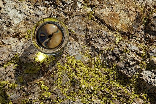 Rockeye by David S Reynolds
