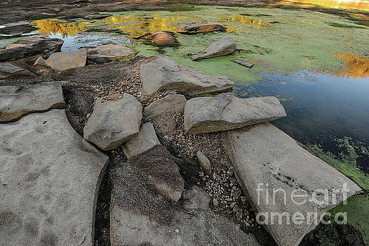 Billy Moore - Rocks, Algae and Reflections