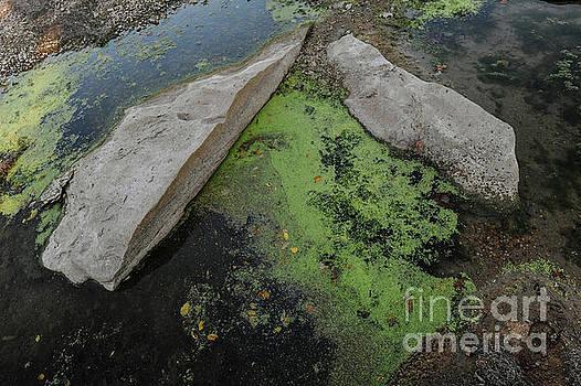 Billy Moore - Rocks and Algae