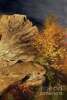 Dan Carmichael - Rocks and Fall Colors at Night in the Blue Ridge AP