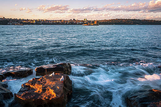 Rocks, Waves and Seagulls in Sydney Harbour by Daniela Constantinescu