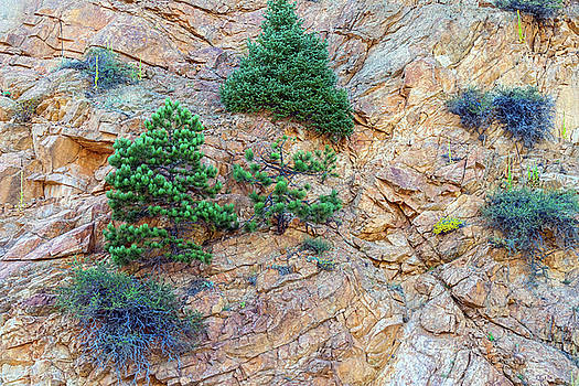 James BO Insogna - Rocky Mountain Canyon Wall  Trees and Color