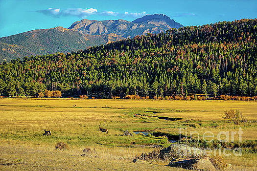 Jon Burch Photography - Rocky Mountain National Park Elk