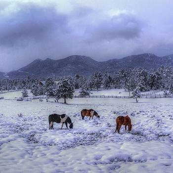 Rocky Mountain National Park, Estes by David Dedman
