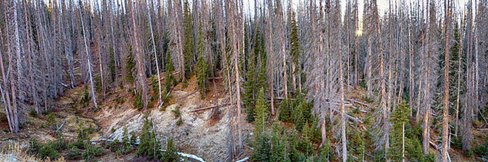 Rocky Mountain Wolf Creek Pass Panorama by James BO Insogna