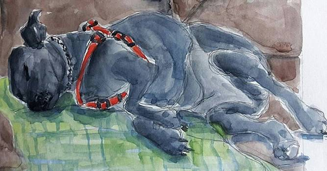 Rocky Napping by Janet Butler