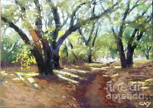 Celine  K Yong - rocky oak park