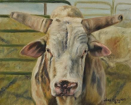 Rodeo Bull 2 by Lori Brackett