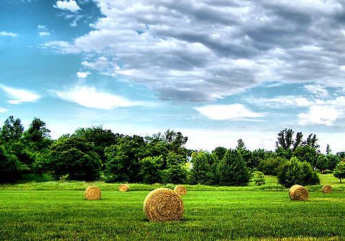 Karen M Scovill - Rolled Hay