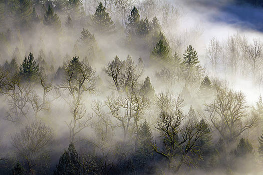 Rolling Fog in Sandy River Valley by David Gn