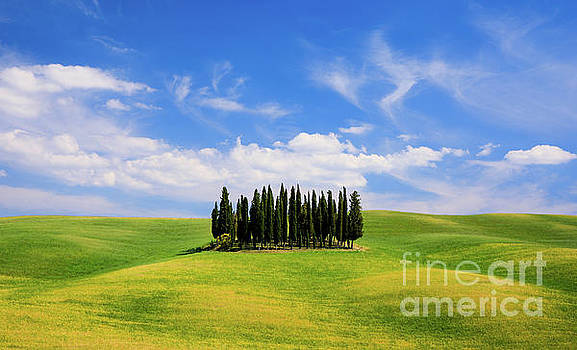 Rolling hills, green fields and cypresses trees in Tuscany, Ital by Noppakun Wiropart