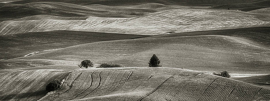 Rolling Hills of the Palouse bw by Jerry Fornarotto