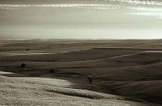 Rolling Hills Toned by Thomas Bomstad