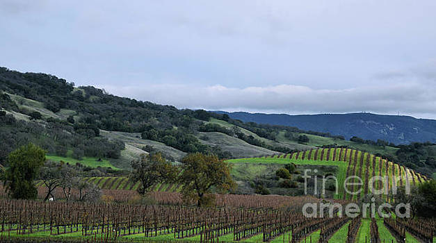 Rolling Vineyards by Nancy Chambers