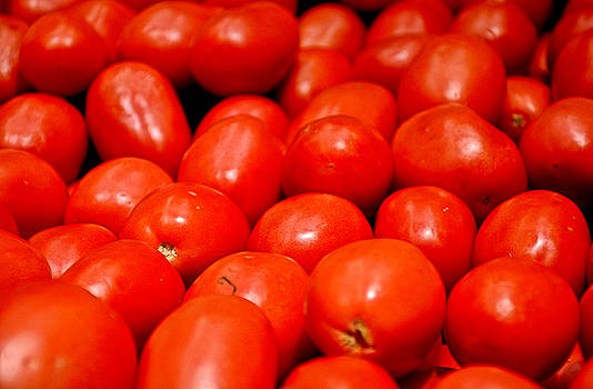 Robert Meyers-Lussier - Roma Tomatoes