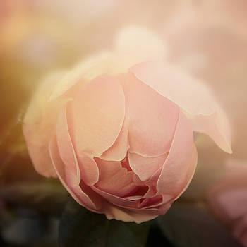 Romance by Cindy Grundsten