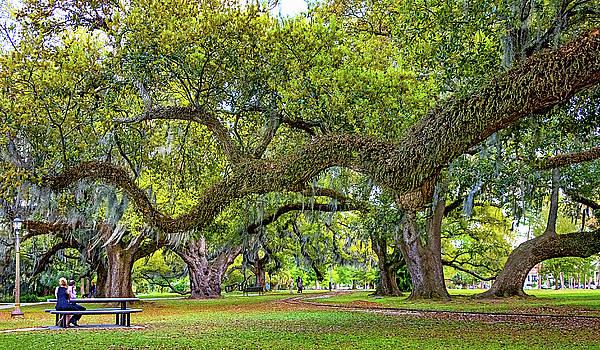Steve Harrington - Romantic City Park - New Orleans