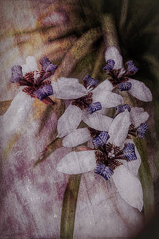 Debra and Dave Vanderlaan - Romantic Island Lilies