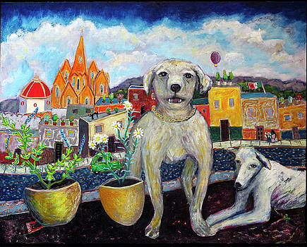 Rooftop Dogs San Miguel by Andrew Osta