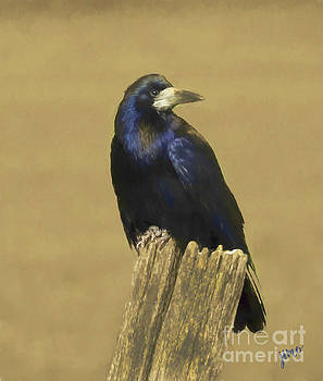 Rook by Jim Hatch