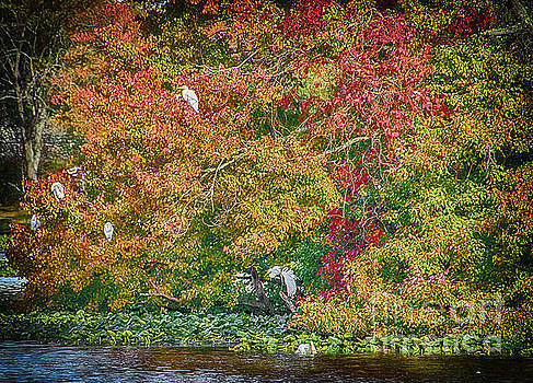 Rookery in Autumn by Judy Hall-Folde