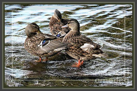 Sandra Huston - Room For One More Mallard Duck