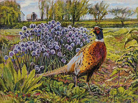 Rooster Pheasant in the Garden by Steve Spencer