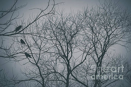 Roosting birds on tree silhouette 2 by Maxwell Dziku