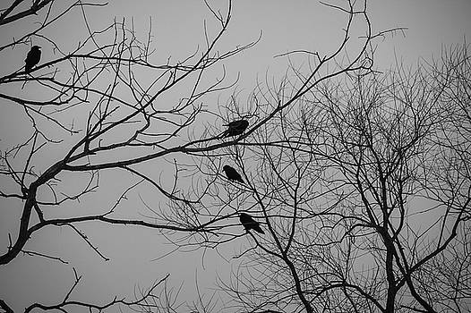 Roosting birds on tree silhouette by Maxwell Dziku