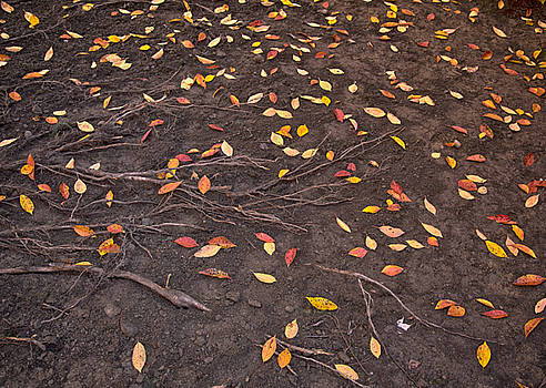 Rooting For Fallen Leaves by Daphne Sampson