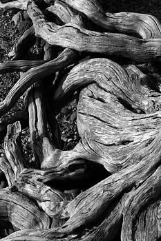 Roots by David Kocherhans