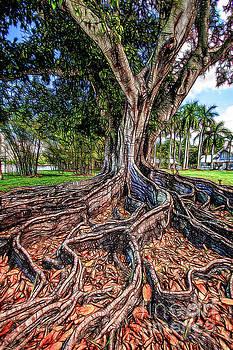 Roots by David Lane