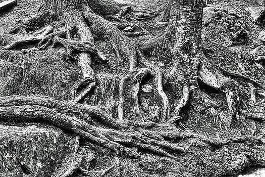 Dawn J Benko - Roots