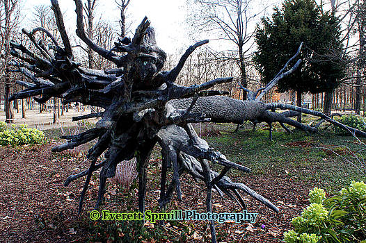 Roots by Everett Spruill