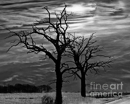 Roots In Black And White by Kathy M Krause