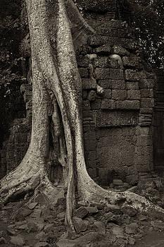Roots In Ruins 1, Ta Prohm, 2014 by Hitendra SINKAR