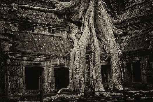 Roots In Ruins 3, Ta Prohm, 2014 by Hitendra SINKAR