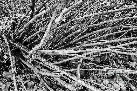 Roots by Leonardo Fanini