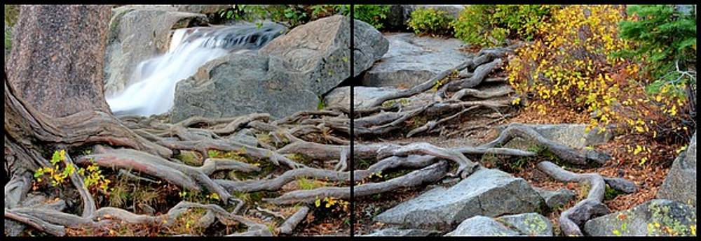 Roots of Change by Brad Scott