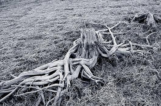 Roots by Peder Lundkvist