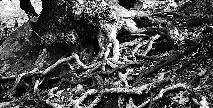 Roots to Life by Ricky Sandoval