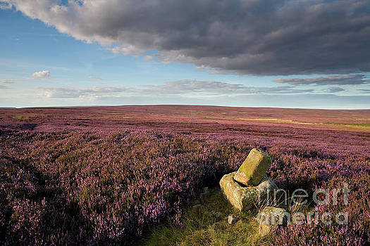 Roppa Cross North, landscape by Gavin Dronfield