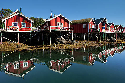 Rorbus and Reflections in Reine by Aivar Mikko