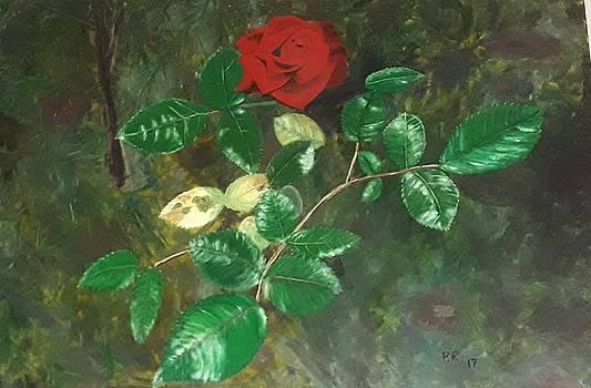 Rosa by Pedro Riera