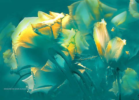 Rosas y Azules by Alfonso Garcia
