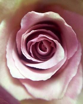 Rose // 5.21.16  #rose #flower #pink by Megan Bishop